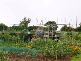 Alton Allotment