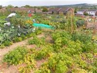 Hawthorns Allotment